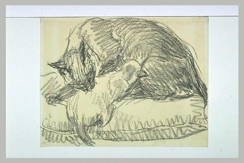 Chatte et chaton pelotonnés sur un coussin