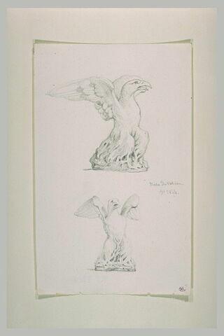 Deux études d'aigle aux ailes déployées