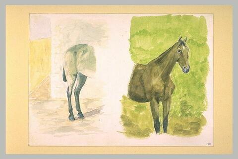 Croupe, et avant-train d'un cheval