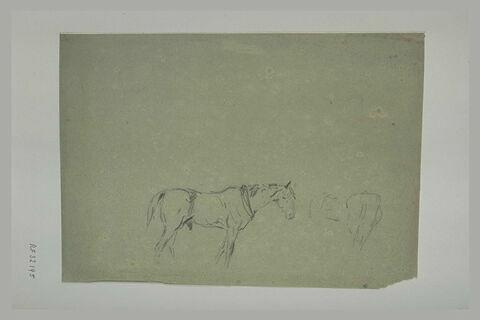 Cheval et croquis de la croupe d'un autre cheval