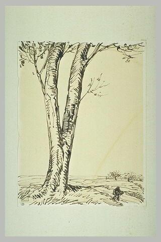 Arbre à double tronc dominant un paysage
