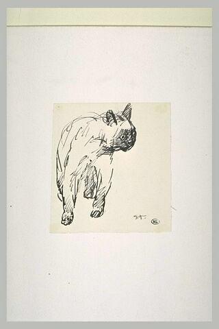 Etude de chat de face, la tête tournée à droite