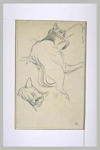 Chat dormant sur le côté, la tête sur un coussin et reprise de la tête