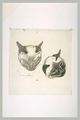 Deux têtes de chats, de face et tournée vers la droite