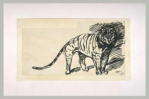Etude d'un tigre, de face, tourné vers la droite