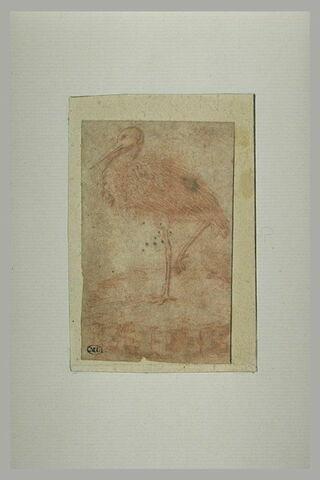 Une cigogne