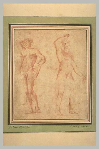 Deux études d'Apollon