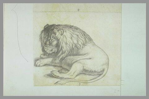 Un lion couché
