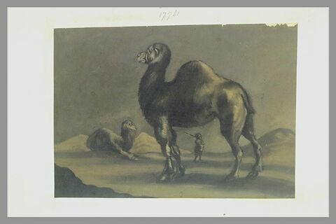 Un dromadaire, de profil à gauche, devant un dromadaire assis et son gardien
