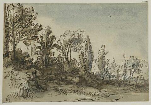 Rideau d'arbres et maison