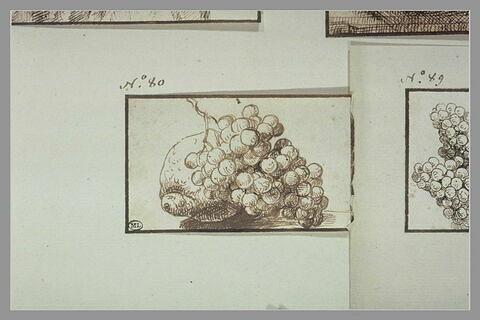 Un agrume et une grappe de raisin