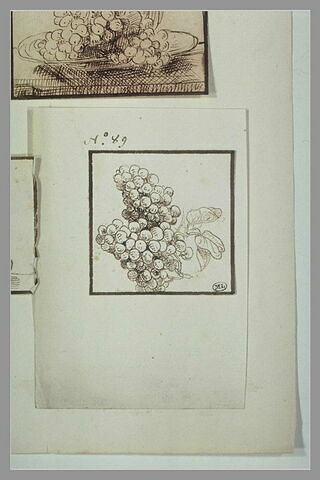 Deux grappes de raisin