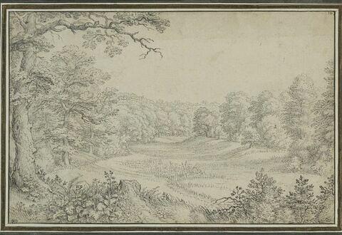 Vue d'une clairière au milieu d'une forêt