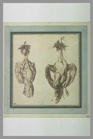 Deux poules plumées, pendues chacune à un clou
