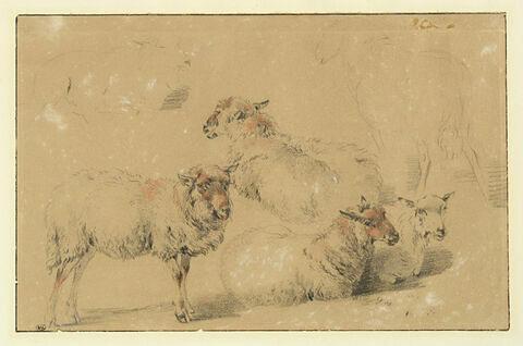 Etude de six moutons