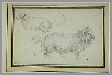 Feuille de trois études de moutons et d'un bélier