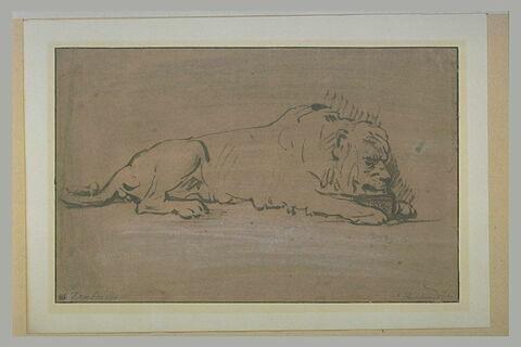 Etude de lion couché et buvant