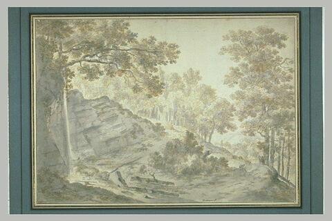 Flanc d'une colline boisée