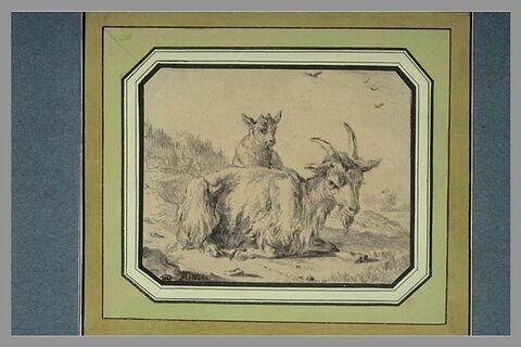 Chèvre et son chevreau, dans un paysage