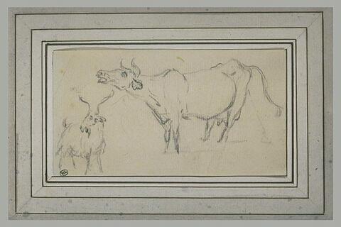 Etudes d'une chèvre et d'une vache