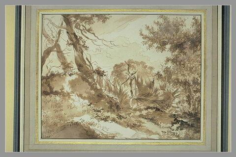 Coin de paysage : arbres et vieille clôture en jonc