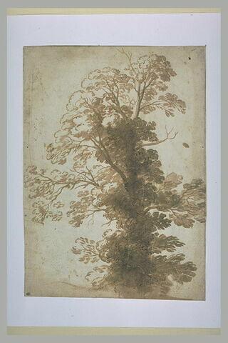 Etude d'un arbre envahi de lierre