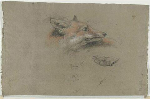 Tête de renard et une patte
