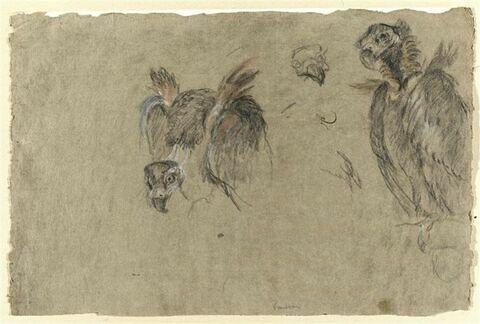 Deux études de vautour et deux détails