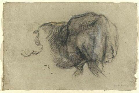 Corps de taureau, vu de dos