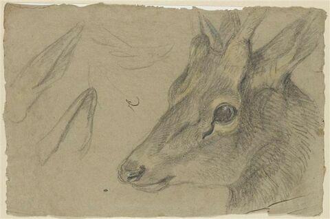 Etude d'une tête de chevreuil ou d'antilope, tournée vers la gauche