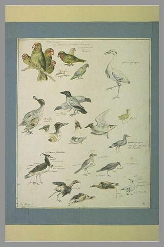 Etudes d'oiseaux