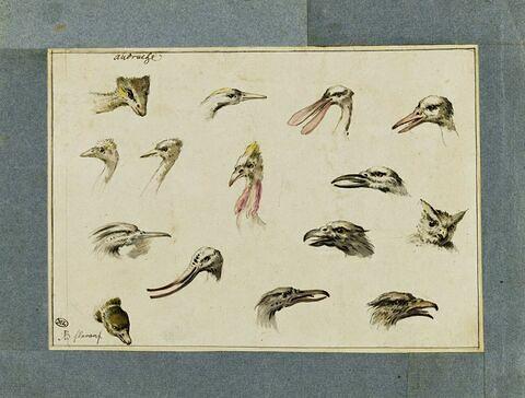 Etude de quinze têtes d'oiseaux divers