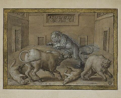 Combat d'un taureau contre un lion, un ours et deux loups