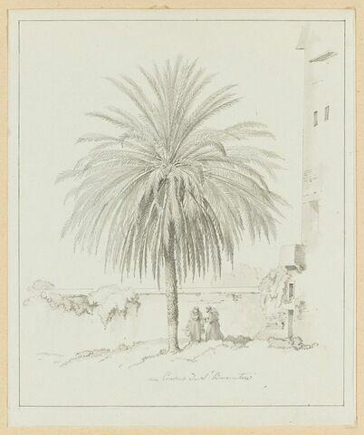 Moines jardiniers sous un palmier