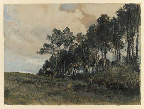 Le bois de Varengeville