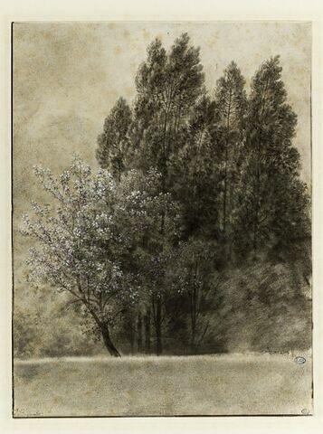 Lisière d'un bois, avec un arbre en fleur