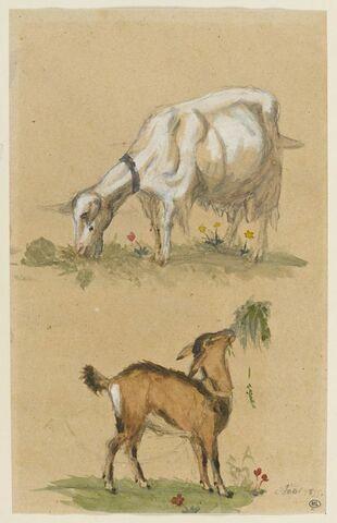 Chèvre et chevreau