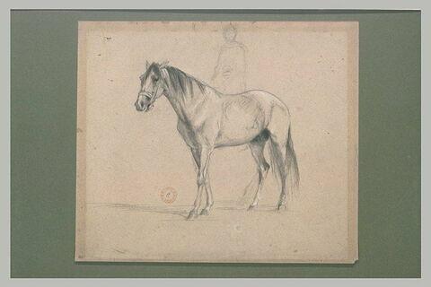 Etude de cheval et silhouette de cavalier