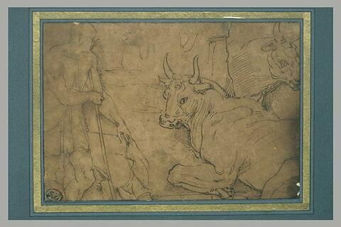 Homme à demi drapé, debout, de profil et deux bovidés