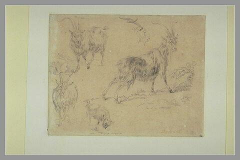 Etudes de trois boucs ; un chevreau et une tête de bouc