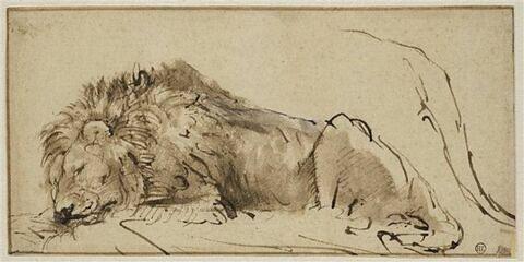 Lion couché et dormant