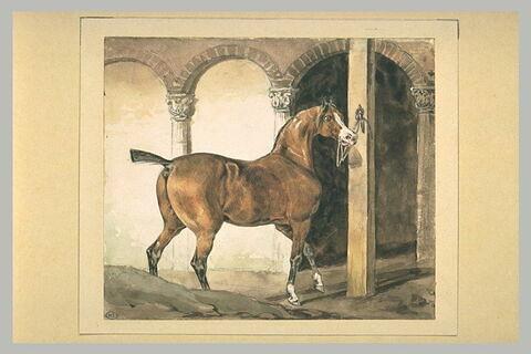 Cheval français attaché devant des arcades
