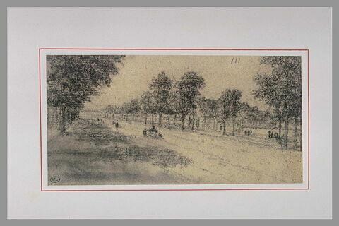 Allée bordée d'arbres