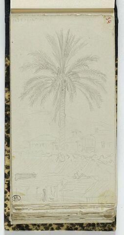 Un palmier à Missolonghi