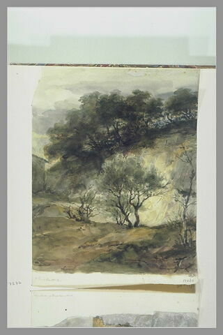 Vallon escarpé avec des arbres