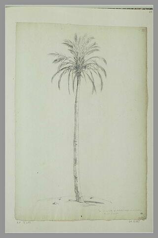 Palmier à Beyrouth