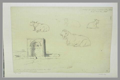 Chêvres et béliers à Naplouse ; fontaine à Jérusalem