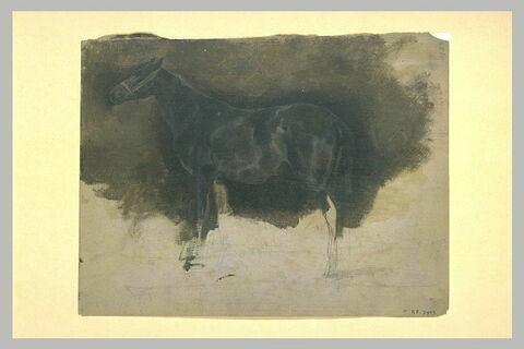 Cheval noir, de profil vers la gauche