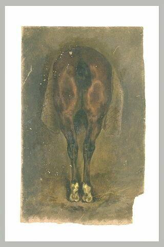 Arrière-train d'un cheval