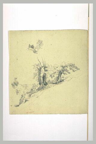 Terrain en pente avec un bouquet de petits chênes